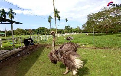 Jelita Ostrich Farm, Usahawan TEKUN Nasional Negeri Sembilan