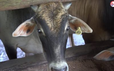 Ternakan lembu daging, Usahawan TEKUN Nasional Negeri Sembilan